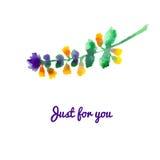 Watercolor floral illustration. Wildflower. Watercolor floral illustration.  Floral decorative element. Vector vintage  floral background. Illustration for Stock Images
