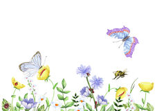 Watercolor floral image with chicory, butterflies and bee Royalty Free Stock Photography