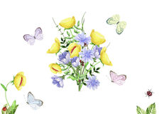 Watercolor floral image with chicory, butterflies and bee Stock Photos