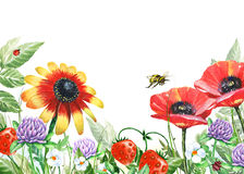 Watercolor floral image with flowers and bumble bee Stock Images