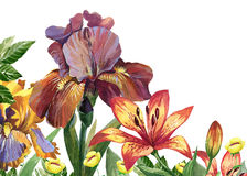 Watercolor floral image with iris and lily flowers Stock Images
