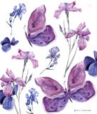 Watercolor floral iris and butterfly on white background 700 dpi Similar illustration leaf geen color royalty free illustration