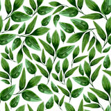 Watercolor Floral Leaf Seamless Pattern Royalty Free Stock Photography