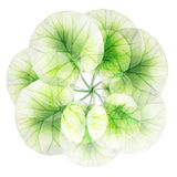 Watercolor floral round patterns. Stock Photography