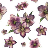 Watercolor floral seamless pattern with hellebore. Hand painted winter flowers and leaves isolated on white background Royalty Free Stock Images
