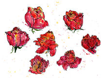 Watercolor floral set Royalty Free Stock Image