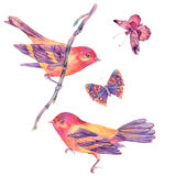 Watercolor floral set of birds and butterflies Stock Images
