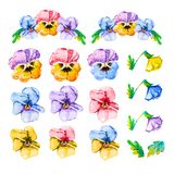 Watercolor floral set collection of yellow, pink, red, purple and blue single head pansy and bouquet of viola.Hand drawn stock illustration