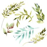 Watercolor floral set. Colorful green floral collection with leaves, drawing watercolor. Set of floral elements for your. Compositions Royalty Free Stock Photos