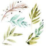 Watercolor floral set. Colorful green floral collection with leaves, drawing watercolor. Set of floral elements for your. Compositions Stock Photo