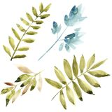 Watercolor floral set. Colorful green floral collection with leaves, drawing watercolor. Set of floral elements for your. Compositions Stock Photography
