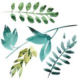Watercolor floral set. Colorful green floral collection with leaves, drawing watercolor. Set of floral elements for your. Compositions Stock Images