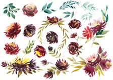 Watercolor floral set. Colorful purple floral collection with leaves and flowers, drawing watercolor. Colorful floral. Collection with flowers. Set of floral Royalty Free Stock Photos