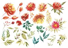 Watercolor floral set. Colorful purple floral collection with leaves and flowers, drawing watercolor. Colorful floral. Collection with flowers. Set of floral Stock Image