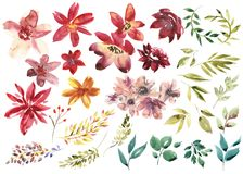 Watercolor floral set. Colorful purple floral collection with leaves and flowers, drawing watercolor. Colorful floral. Collection with flowers. Set of floral Stock Photos