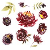 Watercolor floral set. Colorful purple floral collection with leaves and flowers, drawing watercolor. Colorful floral. Collection with flowers. Set of floral Royalty Free Stock Photo