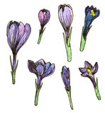Watercolor floral set Royalty Free Stock Photography