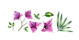 Watercolor floral set of elements. Pink bougainvillea flowers, tree branch, palm leaves. Hand painted floral tropical