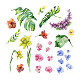 Watercolor floral set. Royalty Free Stock Image