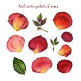 Watercolor floral set of petal rose Stock Image