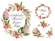 Watercolor floral set with protea, roses for your design. Royalty Free Stock Photo