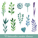 Watercolor floral set. Set of hand drawn plants and flowers for design. Royalty Free Stock Photography