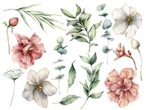 Watercolor floral set with white and pink flowers and eucalyptus leaves. Hand painted roses, buds, berries isolated on