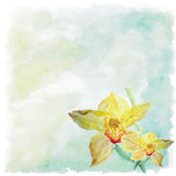 Watercolor floral summer,spring background.Orchid floral decora. Tive Stock Images