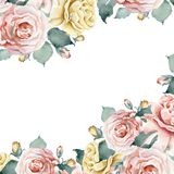 Watercolor floral template frame with pink and yellow tea roses. Hand drawn watercolor floral frame isolated on white background. Pink and tea roses Stock Photo