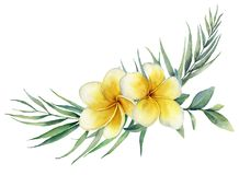 Watercolor floral tropical bouquet with plumeria and palm branch. Hand painted frangipani, eucalyptus isolated on white stock illustration