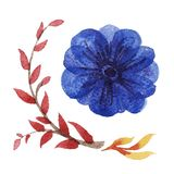 Watercolor floral vector set. Royalty Free Stock Images