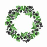 Watercolor floral wreath 5. Black currant. Floral wreath. Hand drawn element for design. Round frame with black currant Royalty Free Stock Photos