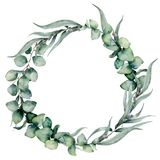 Watercolor floral wreath with different eucalyptus leaves. Hand painted wreath with baby blue, siver dollar eucalyptus. Isolated on white background. Floral stock illustration