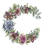Watercolor floral wreath with hellebore flowers and rose. Hand painted snowberry, fir branch and leaves, berry. Succulent isolated on white background. Winter Royalty Free Stock Photography