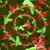 watercolor Flores exóticas - composición decorativa Adornos florales Modelo inconsútil Foto de archivo
