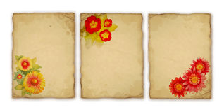 Watercolor flower Royalty Free Stock Images