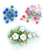 Watercolor flower. Set of watercolor flowers. Painting. I am the author of this picture Royalty Free Stock Photos