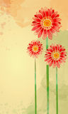 Watercolor flower. S. Painting. I am the author of this picture Royalty Free Stock Photography