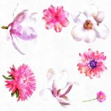 Watercolor Flower Aster Bell Flower Dahlia Illustration Of Beautiful Flowers Set Of Pink Rose Magnolia Stock Photo