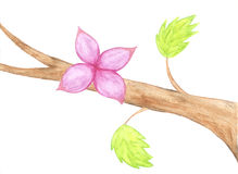 Watercolor flower, branch with red flower and Royalty Free Stock Photography