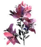 Watercolor flower card Stock Photos