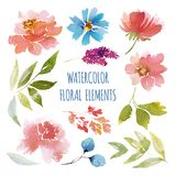 Watercolor Flower collection vector illustration