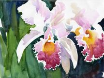 Watercolor Flower Collection: Iris Stock Image