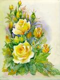 Watercolor Flower Collection: Roses Royalty Free Stock Image