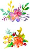 Watercolor flower compositions. Watercolor flowers compositions, watercolor painting, color vector illustration Stock Photos
