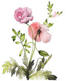 Watercolor flower drawing. Flower drawing with water color royalty free stock images