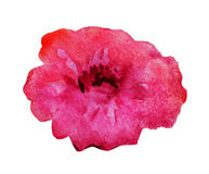 Watercolor flower royalty free illustration