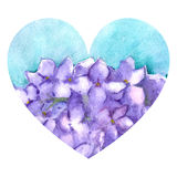 Watercolor flower floral hydrangea lilac nature heart love illustration isolated.  Stock Photo
