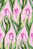 Watercolor flower floral pink tulip seamless pattern background Stock Images