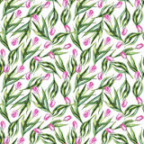 Watercolor flower floral pink tulip seamless pattern background Royalty Free Stock Photos